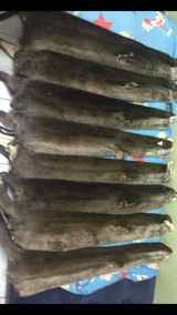 Ателье Silver Fox (мех,кожа,ткани)), фото №3